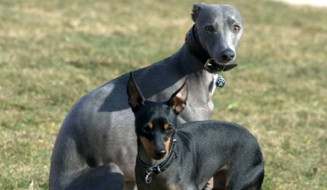 ETTs and Whippets