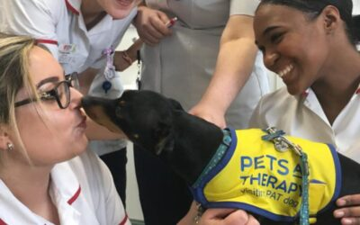 Life as a Pets As Therapy dog